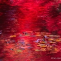 Reflections, Stan Hywet Hall & Gardens, Ohio