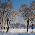 Ice on trees near Hartville in northeast Ohio