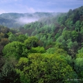 A misty morning at Conkles Hollow State Nature Preserve in the Hocking Hills, Ohio.