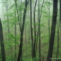 A misty morning along a forest road in Shawnee State Forest in Scioto County, Ohio.
