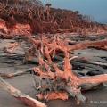 Sunrise at Black Point Beach, Big Talbot Island State Park, Florida
