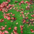 Tupelo leaves and moss, Thompson Ledges, Ohio