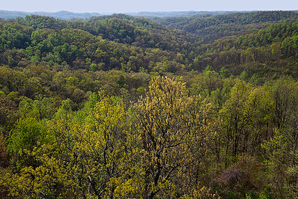 View from Copperhead Fire Tower, Shawnee State Forest