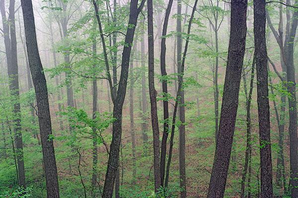 Mist, Shawnee State Forest