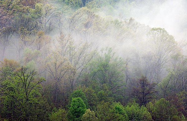 Misty Hillside, Shawnee State Forest, Ohio