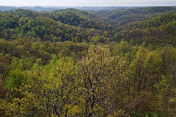 [Trama obligatoria] Tras las huellas de Hale Taisha - Página 6 Copperhead-Fire-Tower-View-Shawnee-SP