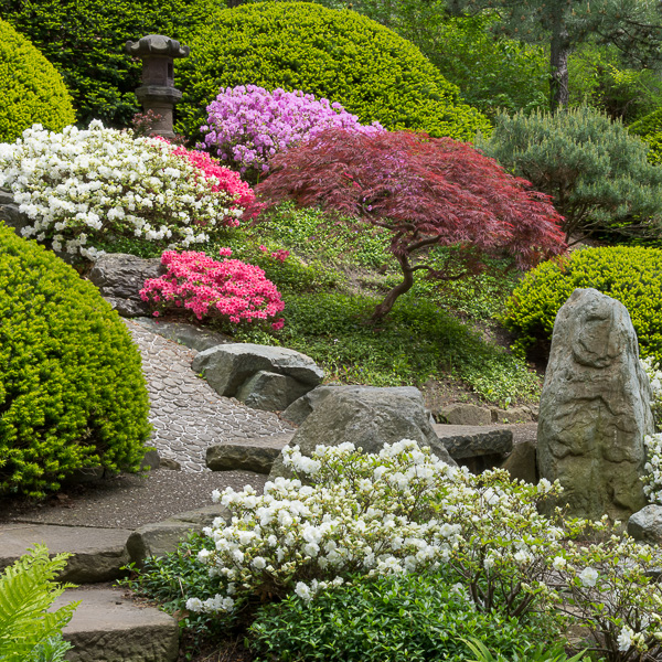 The Japanese Garden At Cleveland Botanical Garden In University Circle,  Cleveland, Ohio