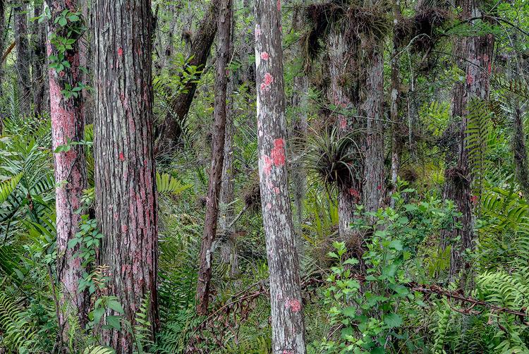 The World of Lichens – The Holden Arboretum, Kirtland, Ohio