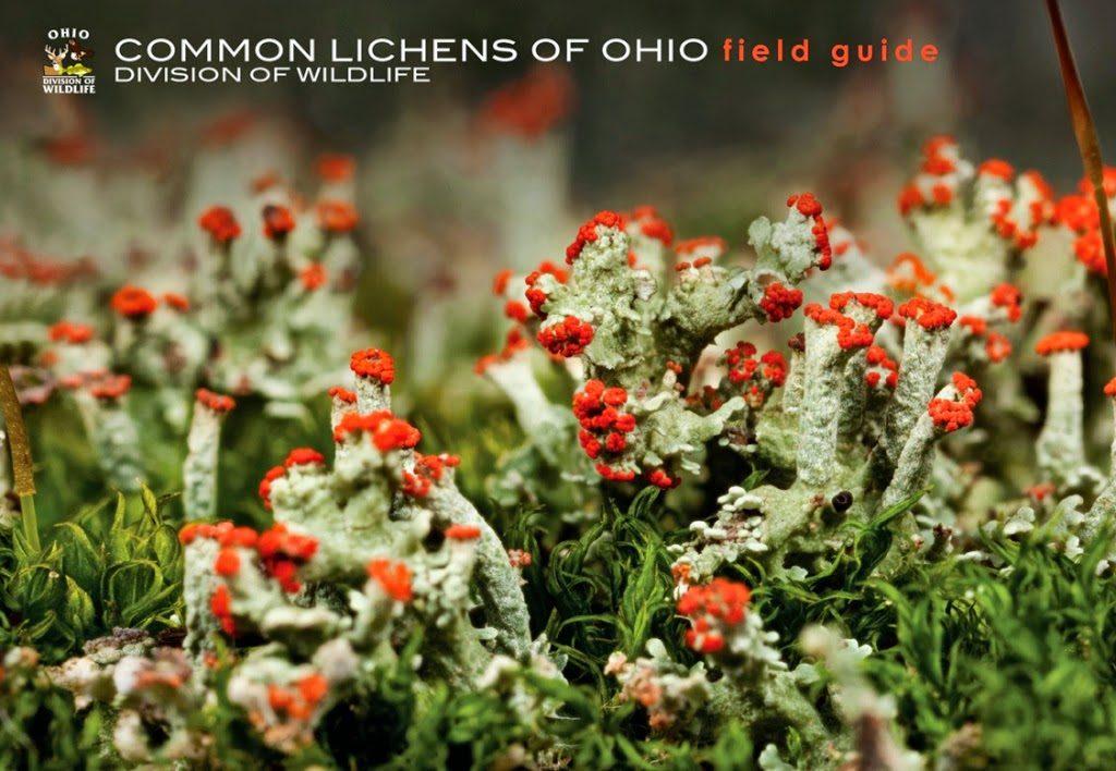 Lichen-Guide-Cover-1024x708.jpg